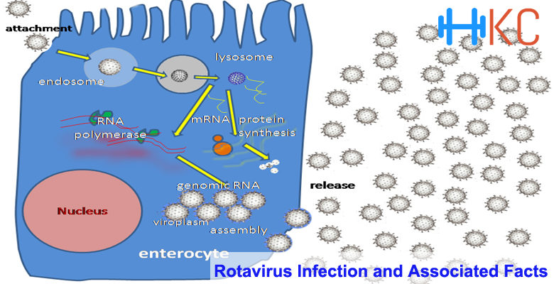 Rotavirus Infection and Associated Facts