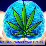 How Cannabis Can Protect Your Brain?