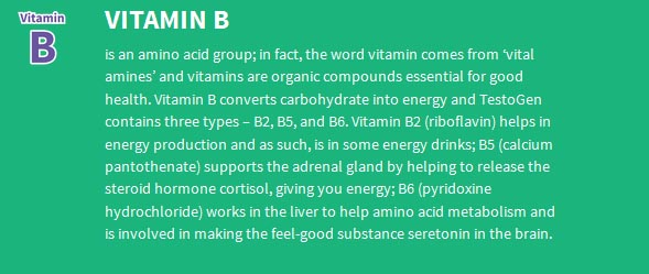 testogen-vitamin-B